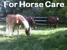 For Horse Care